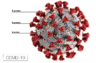 5e7de5ec392a9_SARS-CoV-2 Research